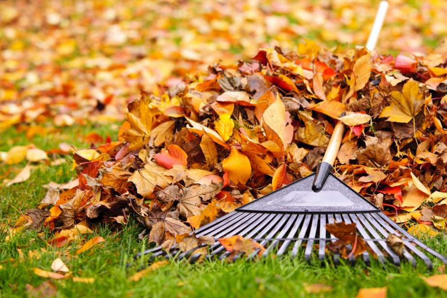 Fall Electrical Safety Tips: Time To Break Out The Leaf Blower