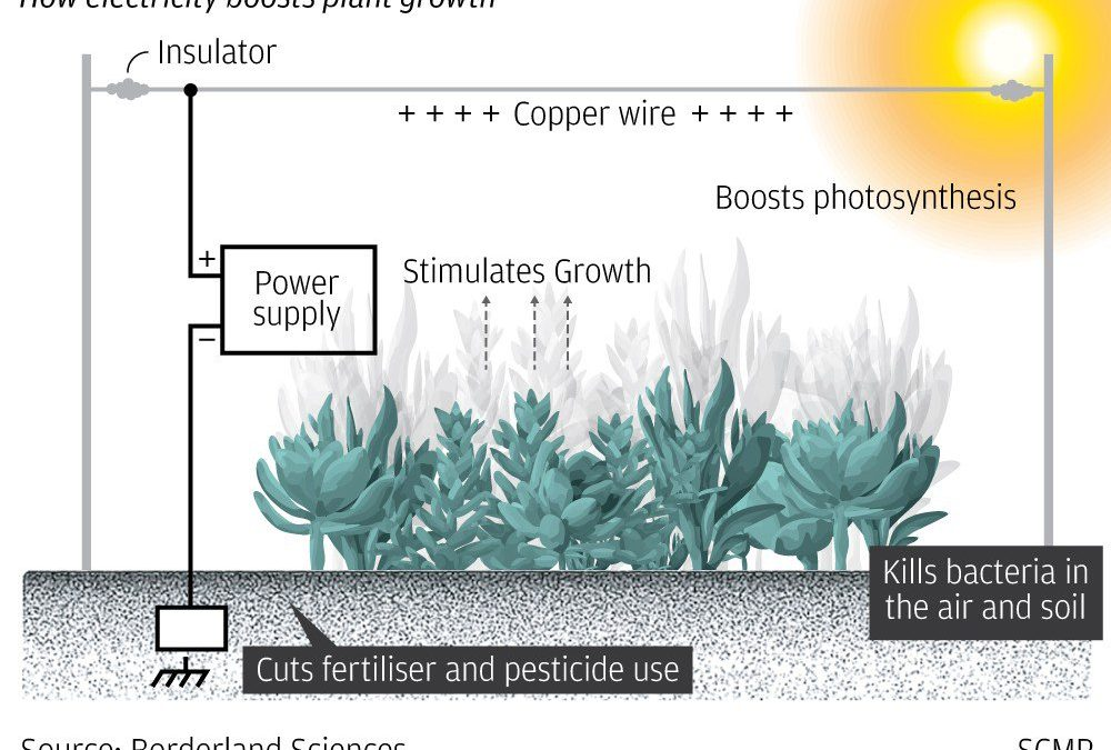 Growing Vegetables With Electricity: China Is Doing It
